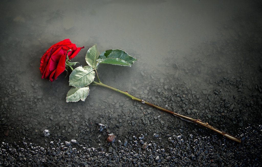 Discarded love